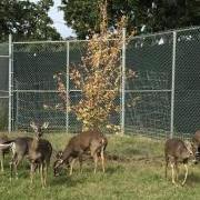 Wildlife Center Tree